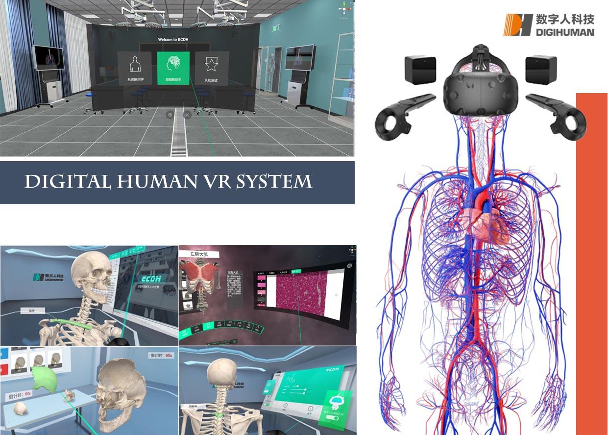 Studies of Anatomy in AR / VR
